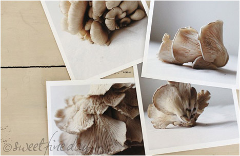 Oyster Mushroom Series no1 | 4 Fine Art Prints